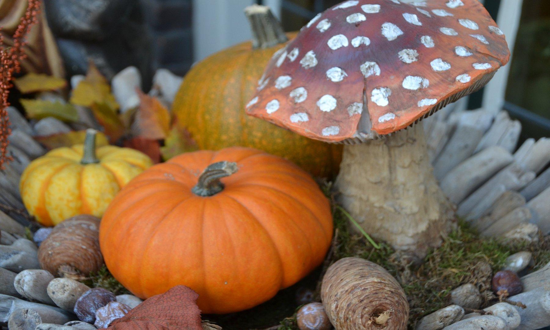 Autunno in tavola con funghi e zucca