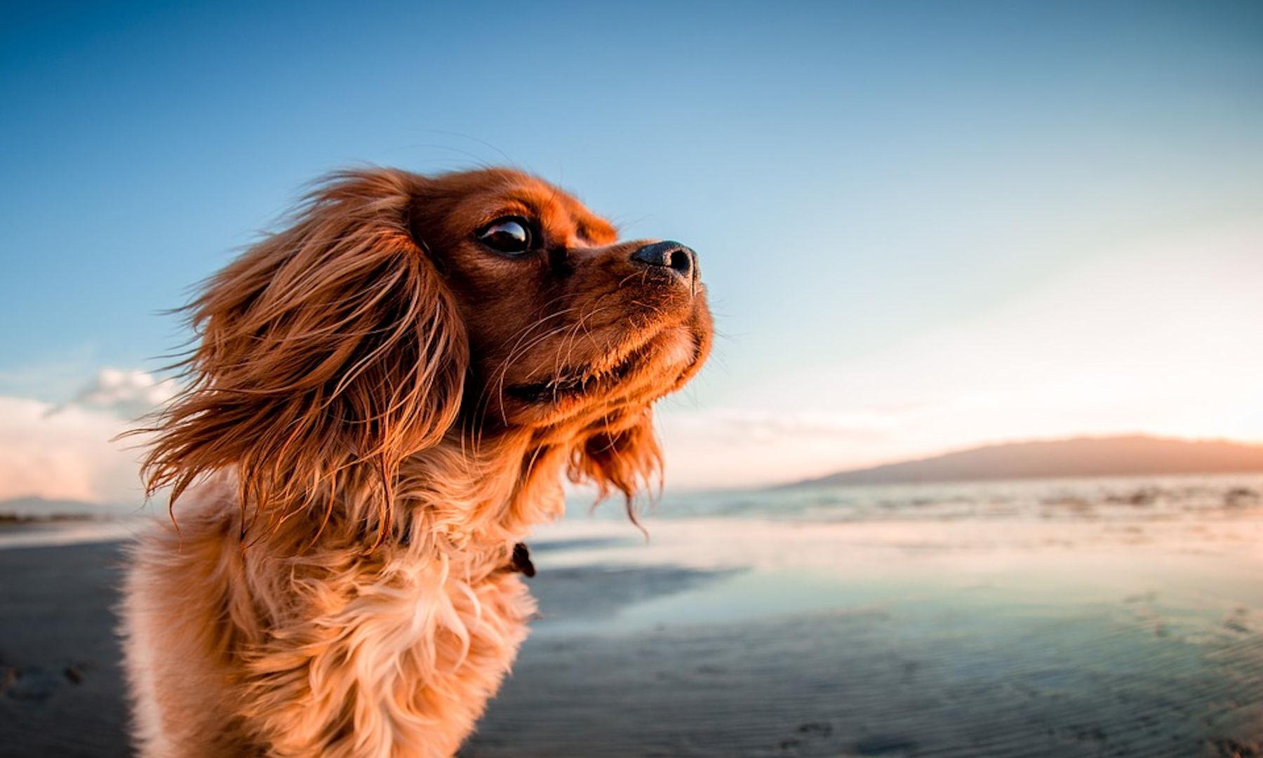Cani in spiaggia: sì o no?