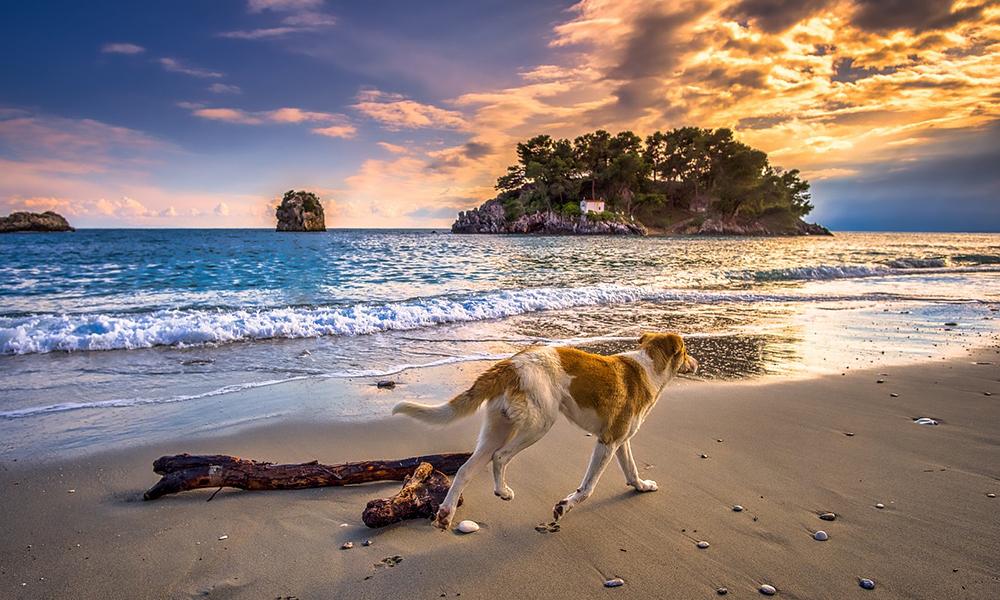 Comacchio: quali spiagge libere per i cani e dove possono fare il bagno