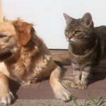 Animali in viaggio: Quali documenti servono?
