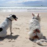 Spiagge per cani dove andare al mare col cane