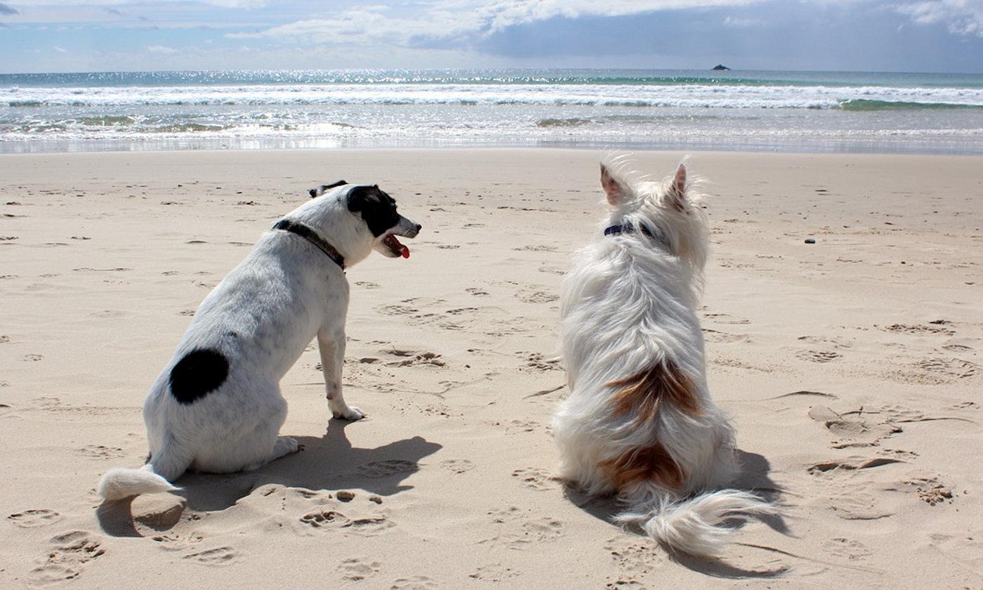 Spiagge per cani - Copertina